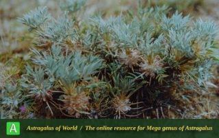 Astragalus gamasiabensis